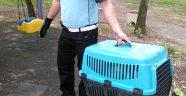 Büyükşehir Zabıtasından yaralı kediye yardım eli