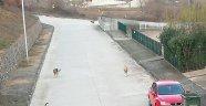 Gölkent'te ve Gündoğdu'da Köpek Tedirginliği